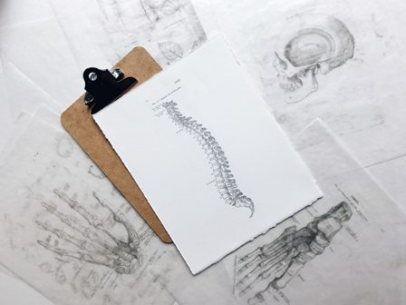 Chiropractic drawing